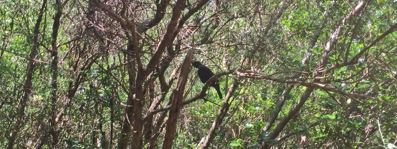 paekakariki escarpment track bird