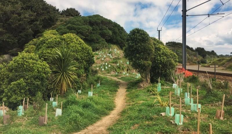 paekakariki escarpment trail walk