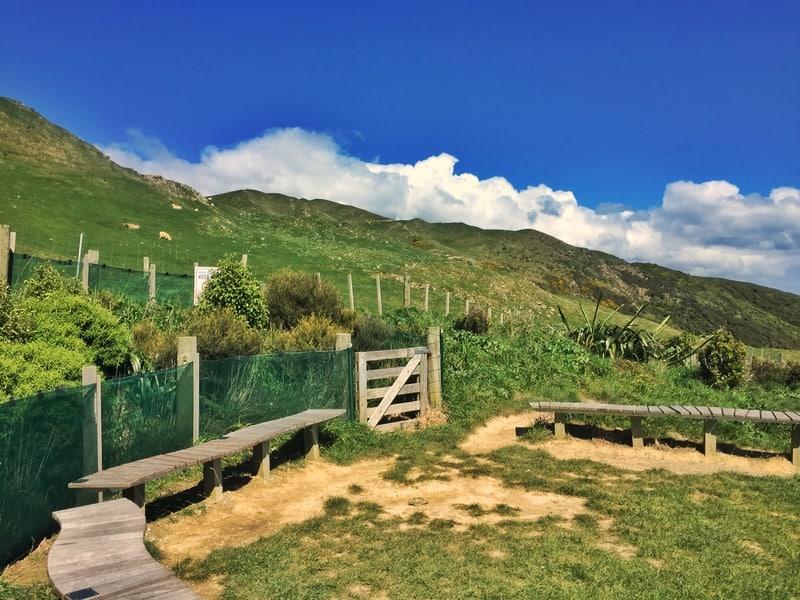 paekakariki escarpment walk