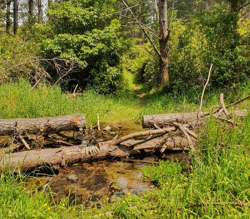 small stream crossing with logs to hop over