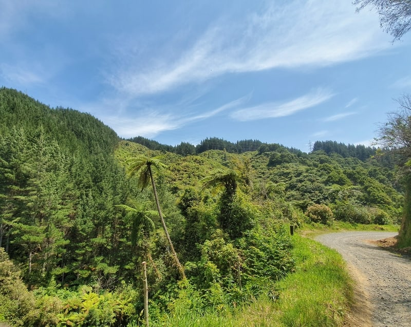 a 4wd track surrounded by green bush and blue skies