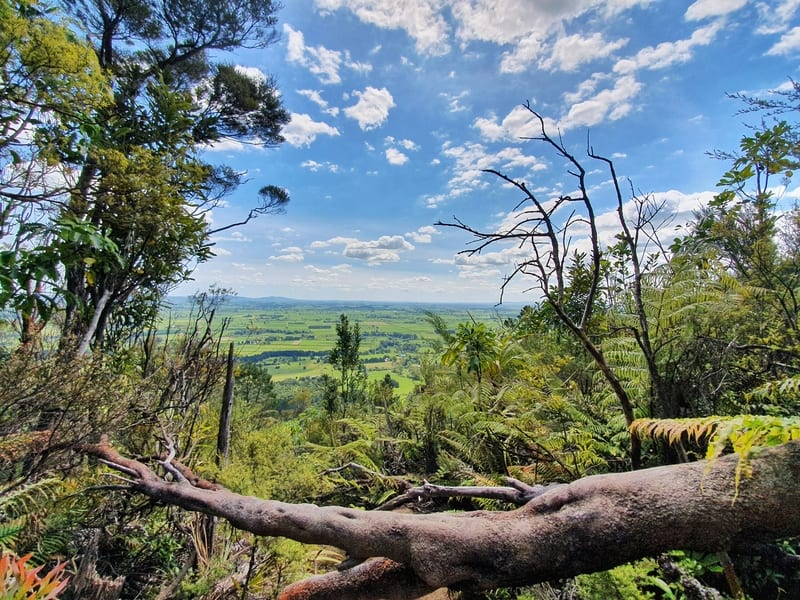 view from the ancient maori trail