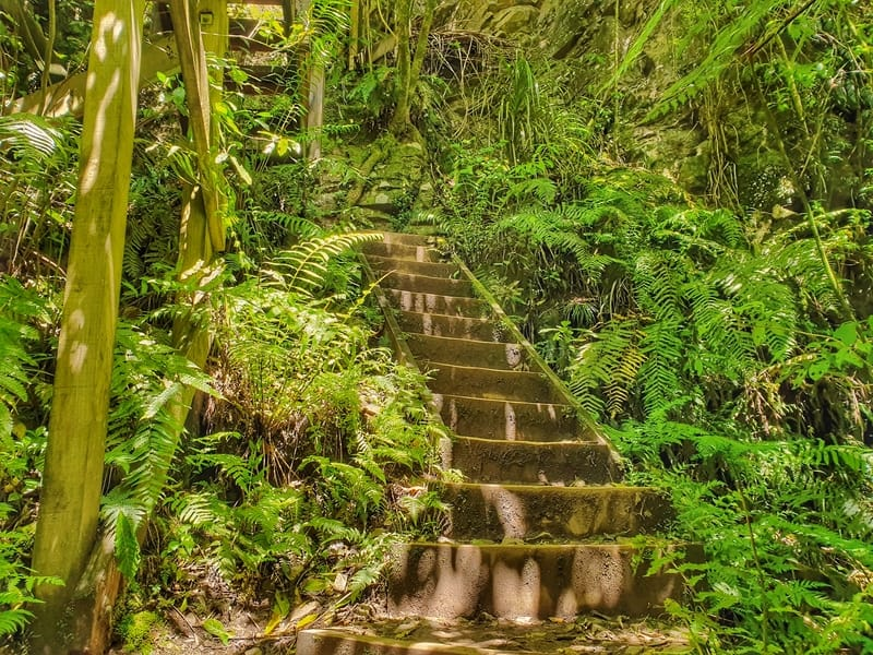 a flight of stairs in the bush