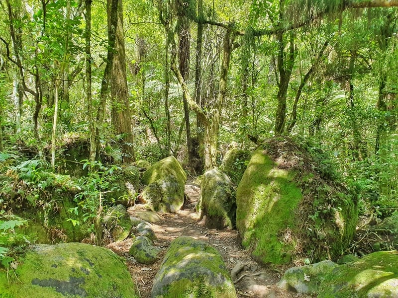 the wairere falls trail with a view of the boulders covered in moss