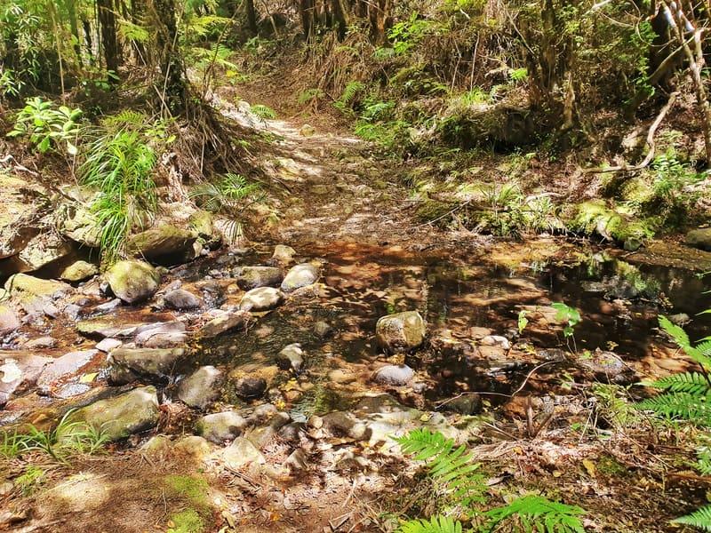 wharekirauponga loop creek crossing