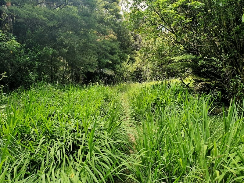 tall grass with a track
