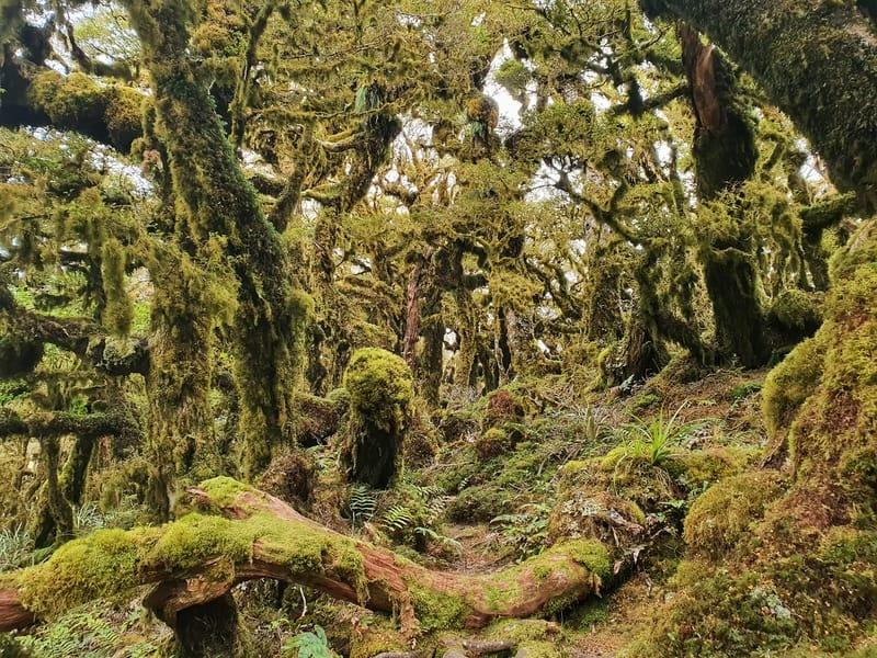 kapakapanui forest goblin forest