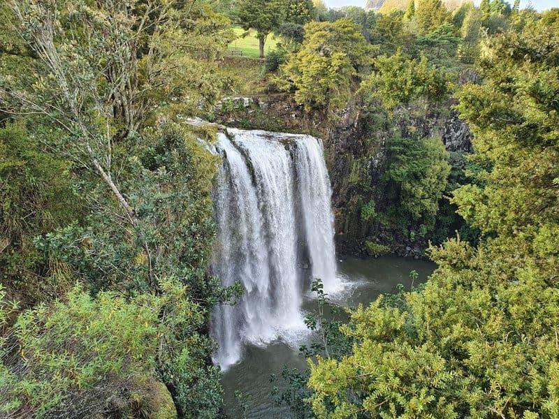 the whangerei falls