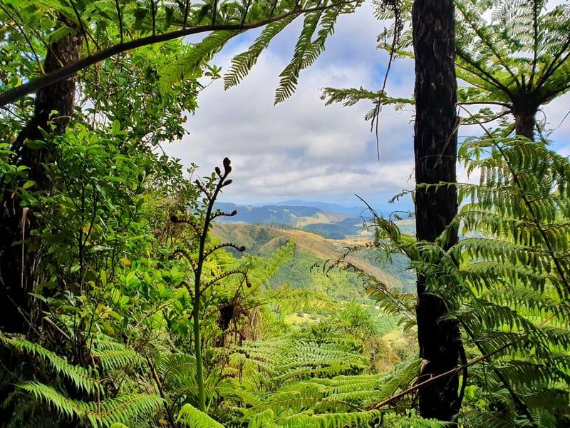 kapakapanui track view