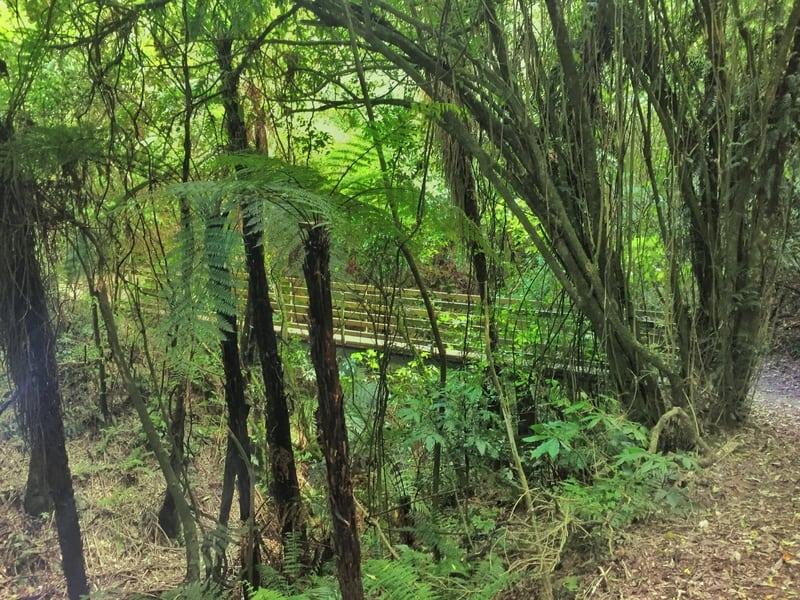 a small bridge crossing on the manawatu gorge track
