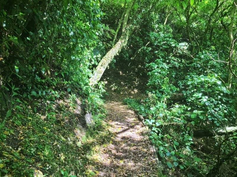 trail surrounded by bush