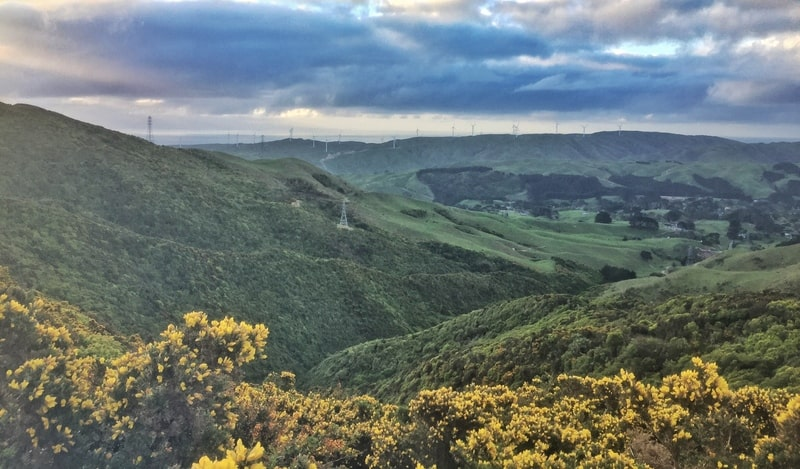 view of hills and gorse