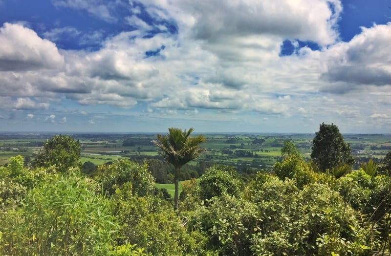 the view from toms lookout is alll green