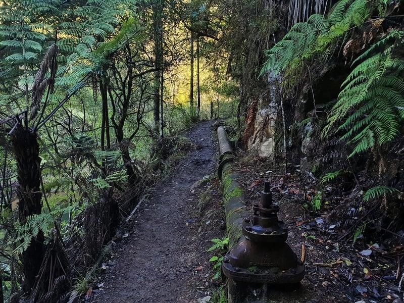 karangahake walking tracks