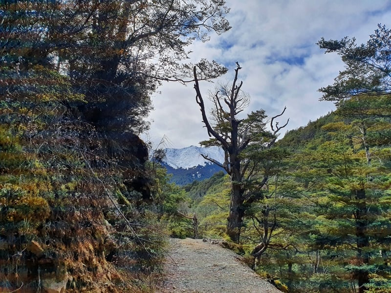 mount crichton loop walk