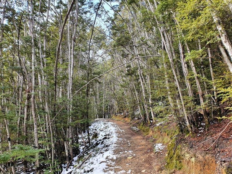 mount crichton path
