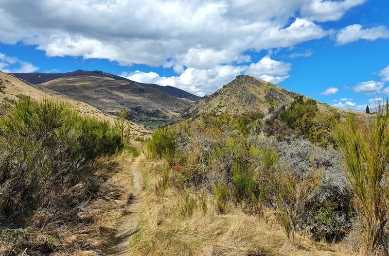 new chum gully track arrowtown