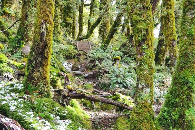 walks in the tararua ranges on the way to powell hut